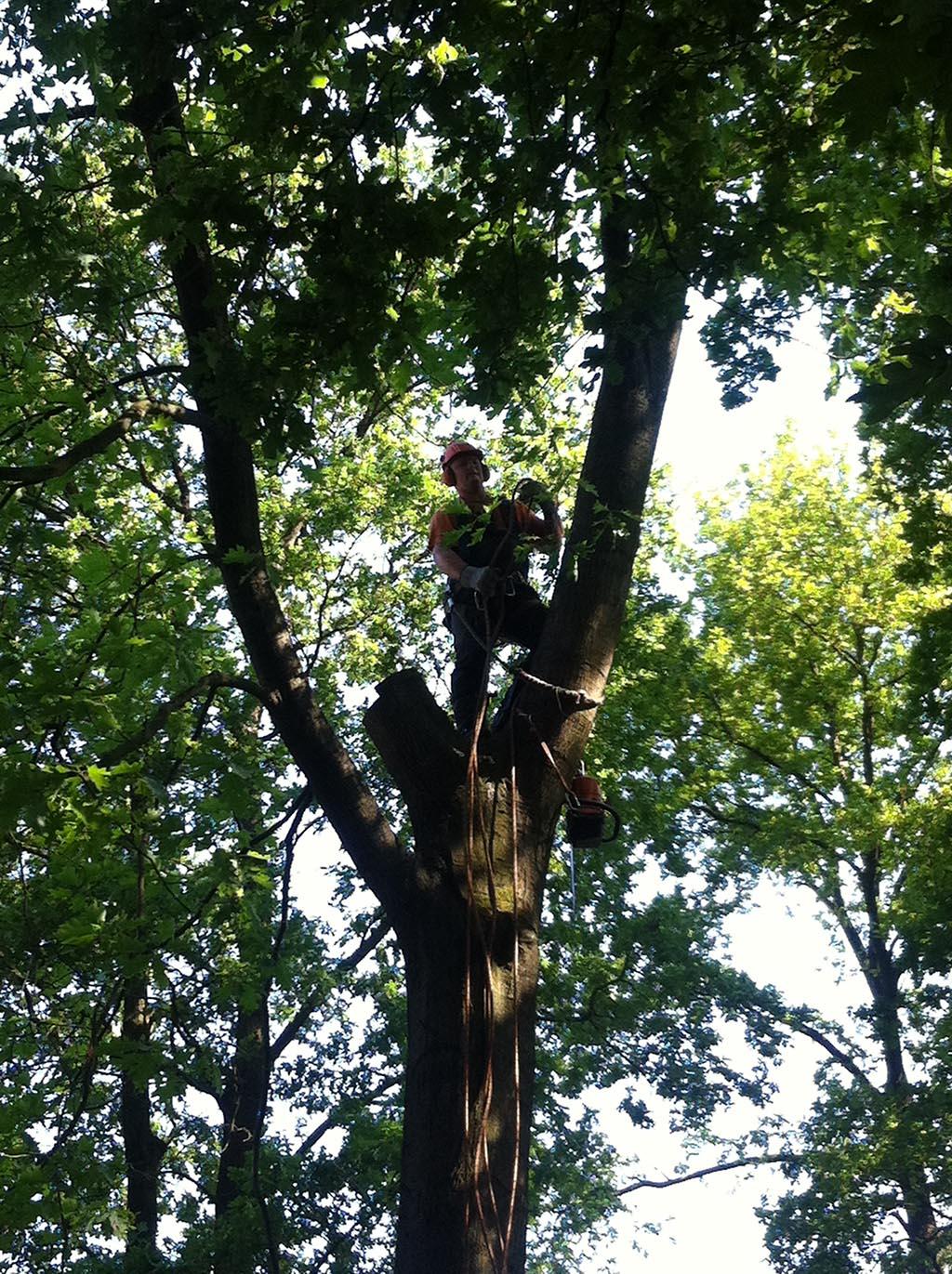 Rooien, kappen, vellen van bomen in Waalwijk