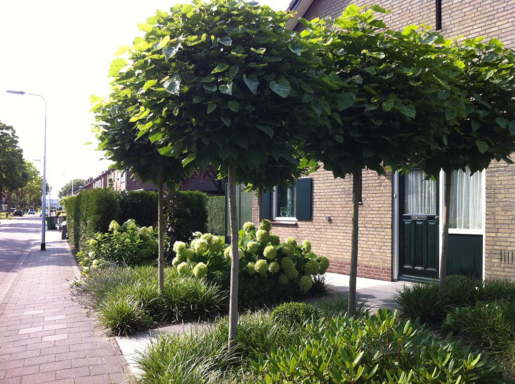 Bomen rooien aanleggen van een kleine voortuin - Boom ontwerp ...
